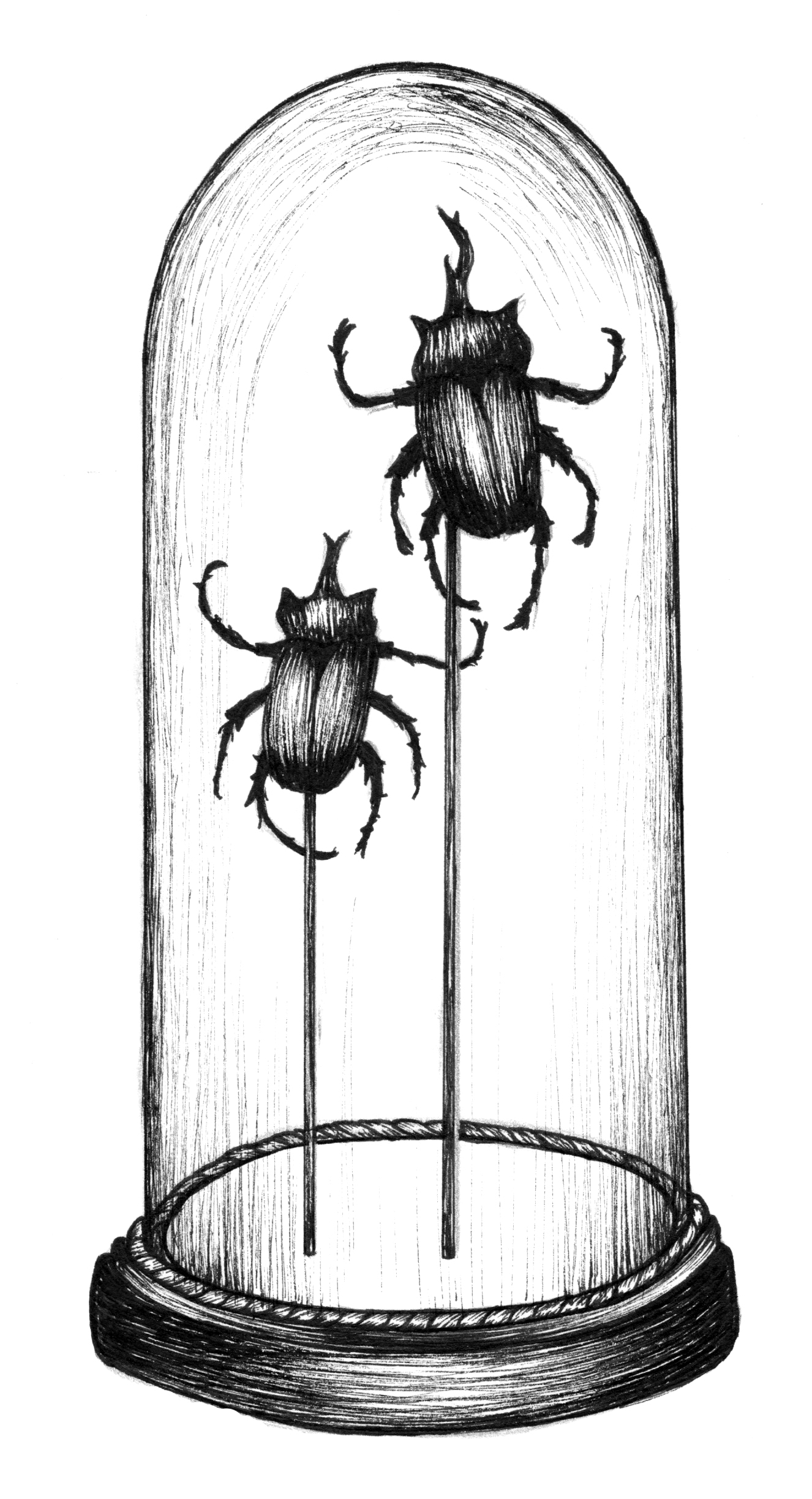 illustration7_2bugs.jpg