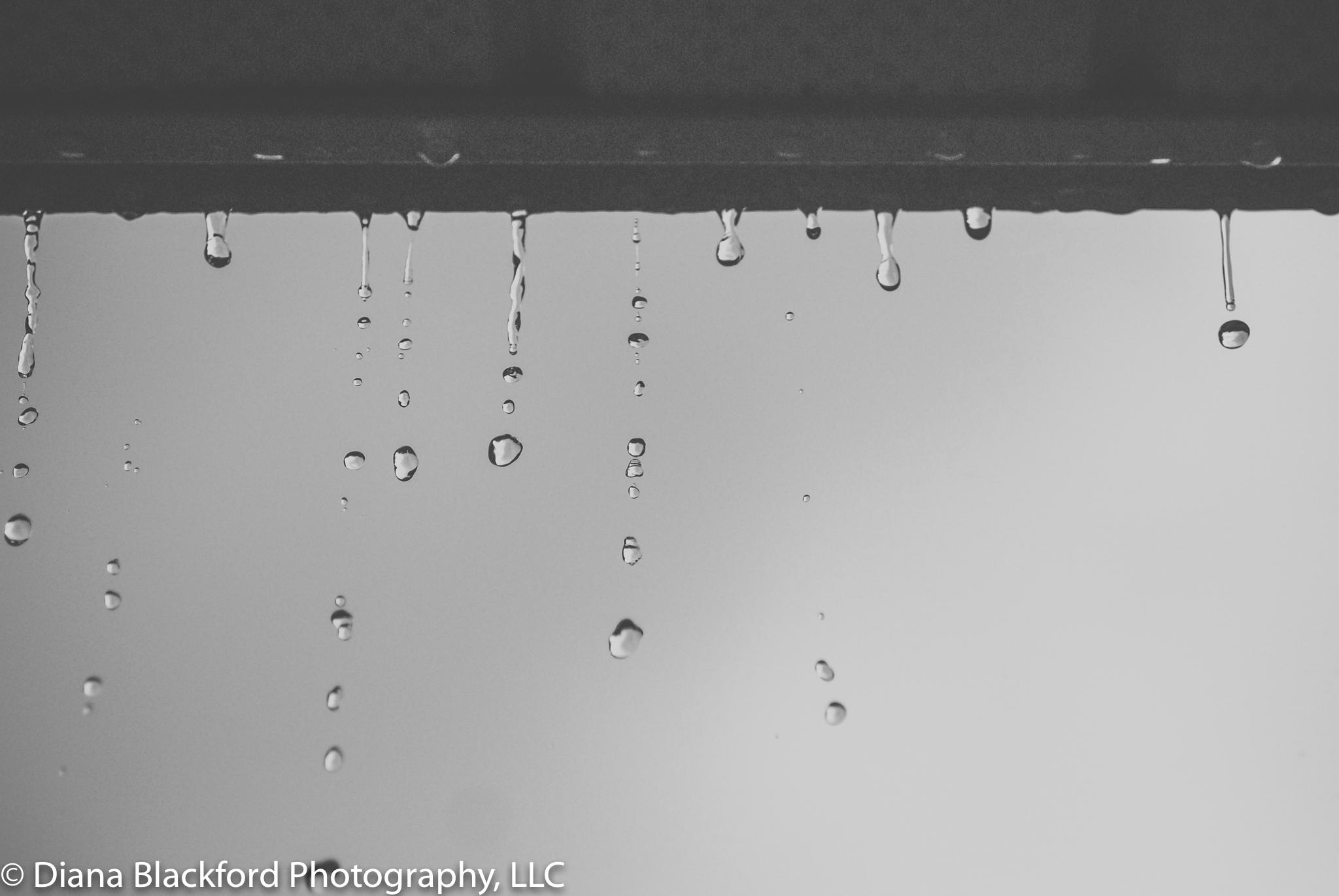 DSC_0011-3.jpg
