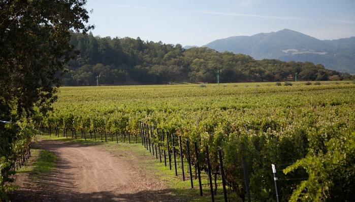 Gemstone Vineyard, Napa Valley