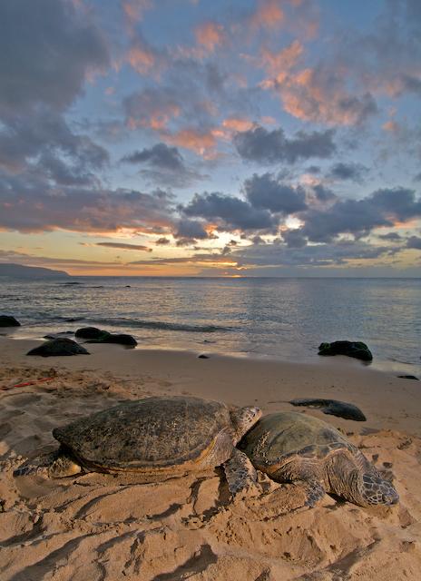 hawaii snorkeler.jpg