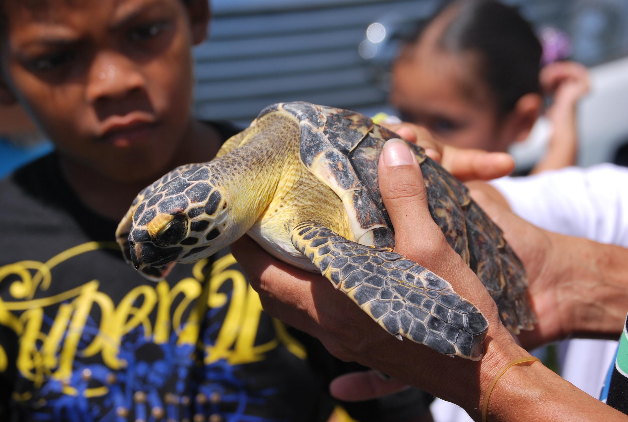 Sea Turtle Lesson Plans