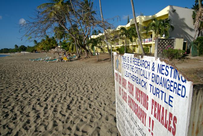 tobago beach hotel.jpg