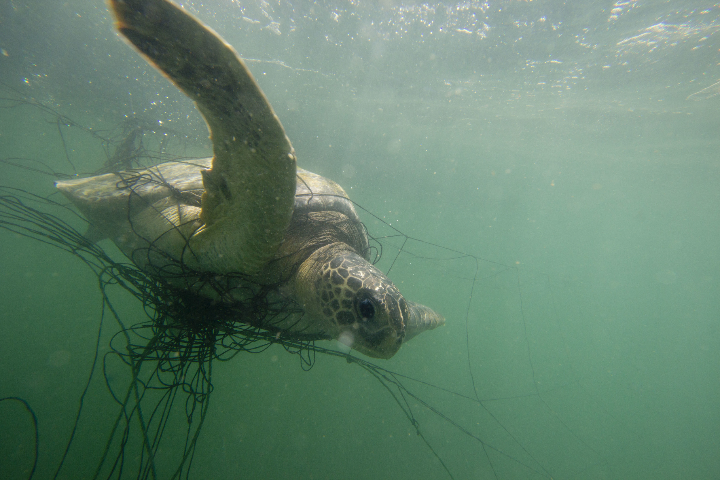 turtle and fishing gear