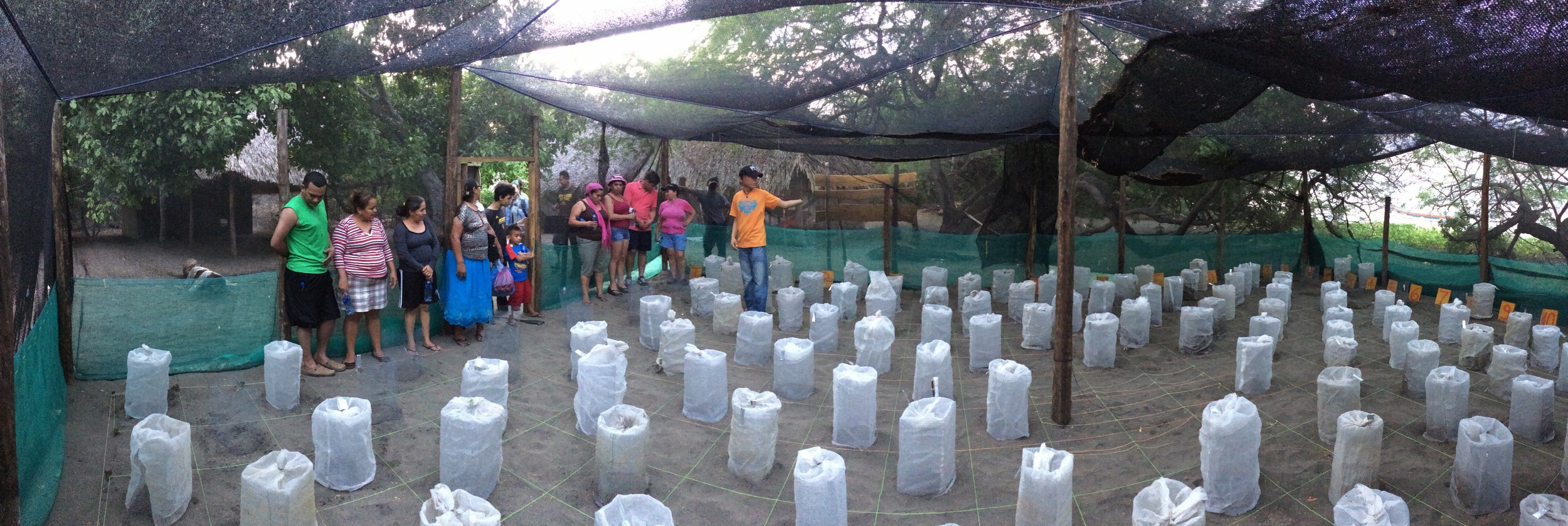 Teachers visiting a sea turtle hatchery in Nicaragua (credit: Brad Nahill)