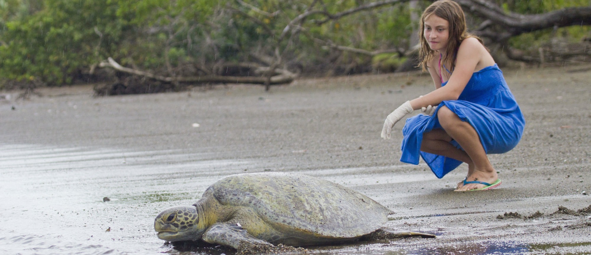 A young traveler watches a green turtle return to the water in Costa Rica (credit: Hal Brindley)