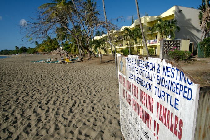 Hotel built on a turtle nesting beach. Photo by Neil Osborne