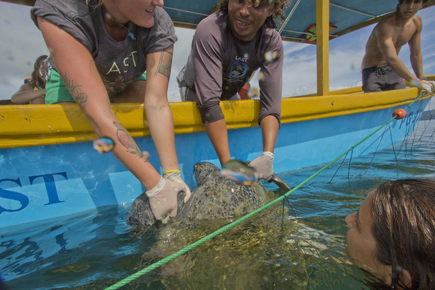 Help researchers set nets to catch the turtles