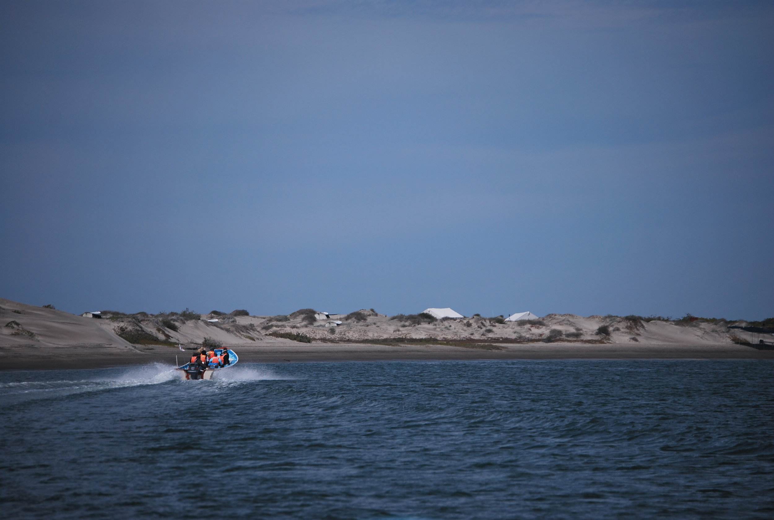 Day 2: We will head to Magdalena Bay to the tent camp and look for whales on the way