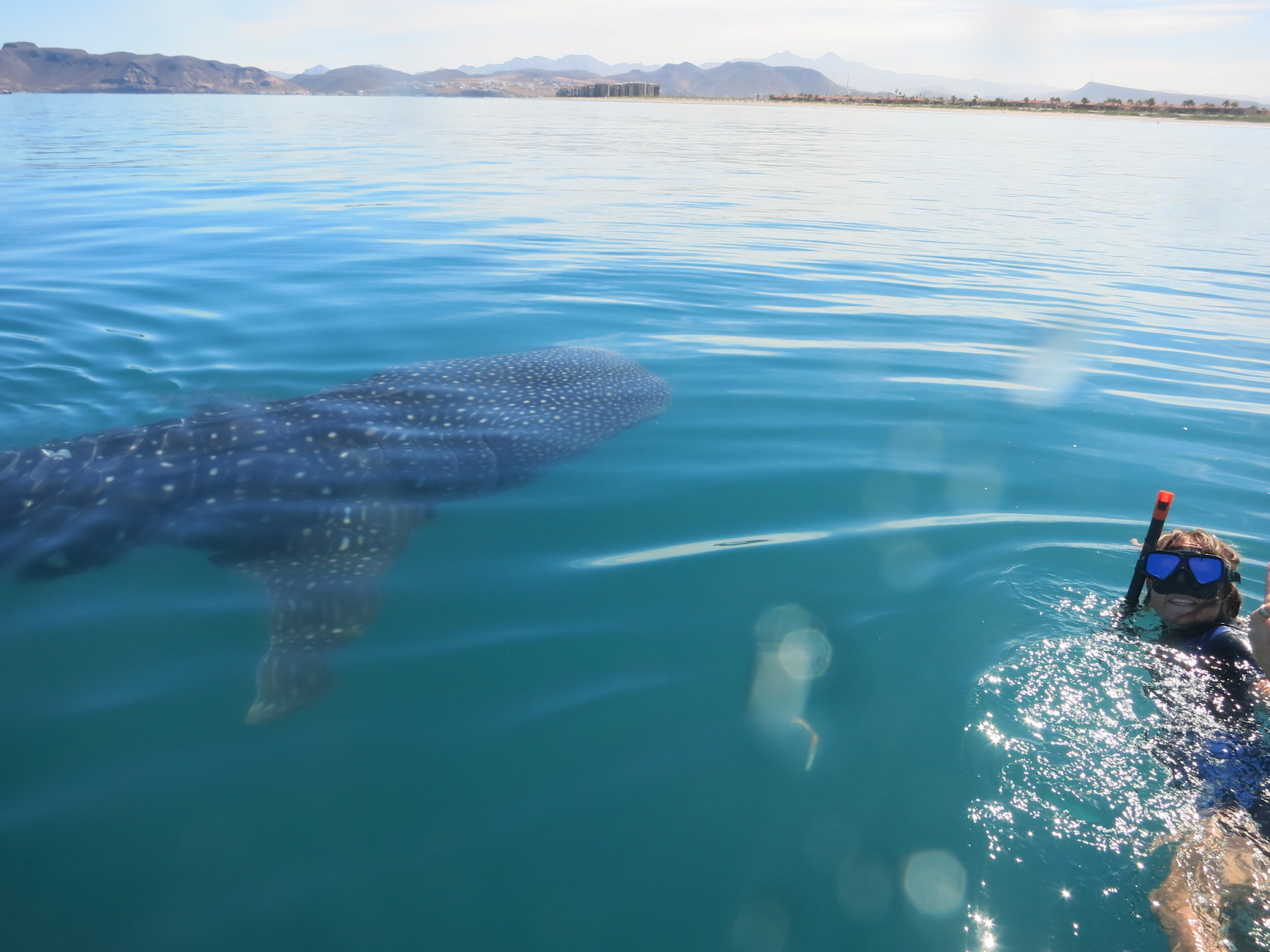 Day 6: Whale Shark Research - snorkel with these incredible giant fish