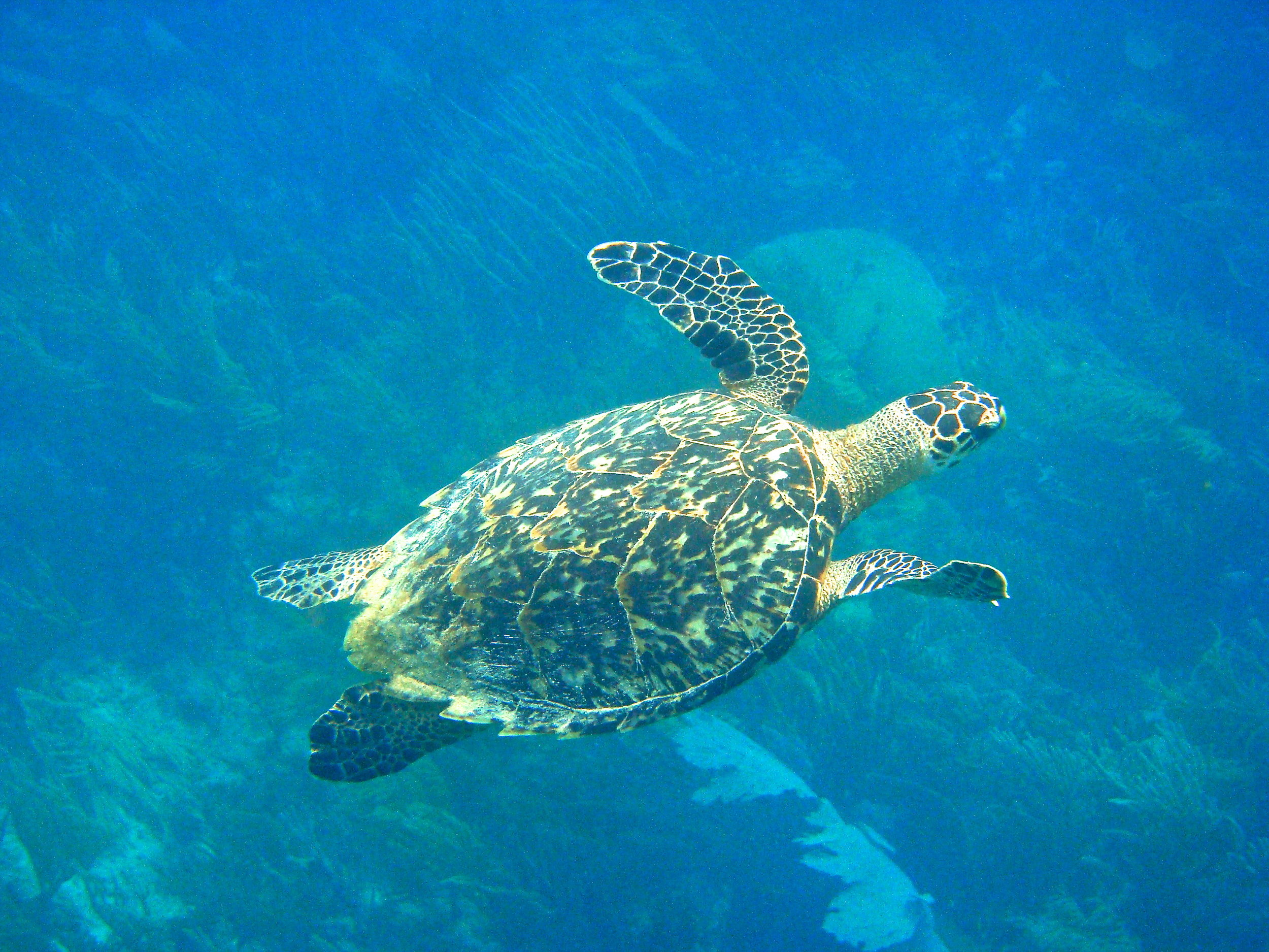 We will have a third day of turtle monitoring. After dinner, we'll have an opportunity to swim in bioluminesence.