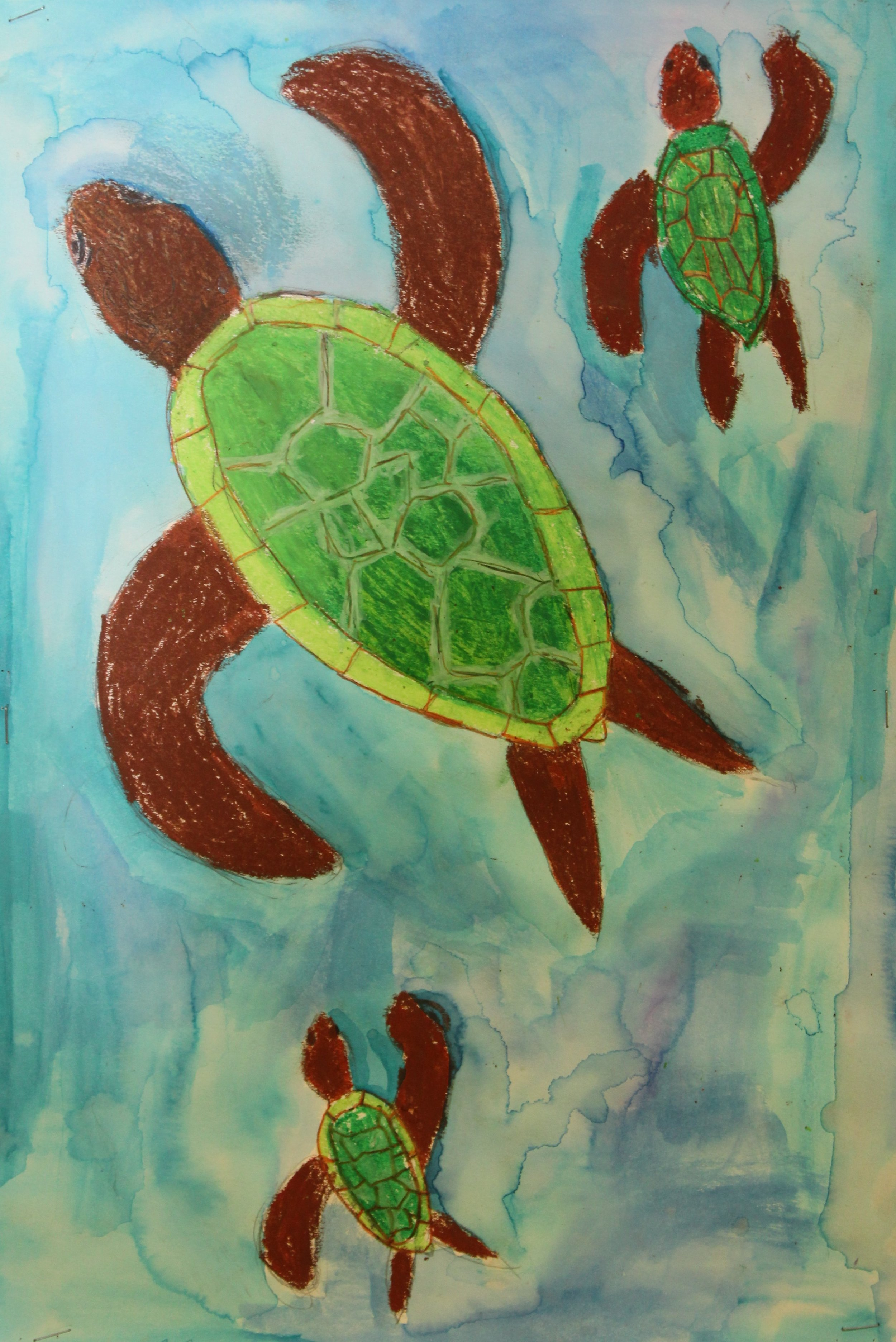 Swimming Turltes oil pastel.JPG