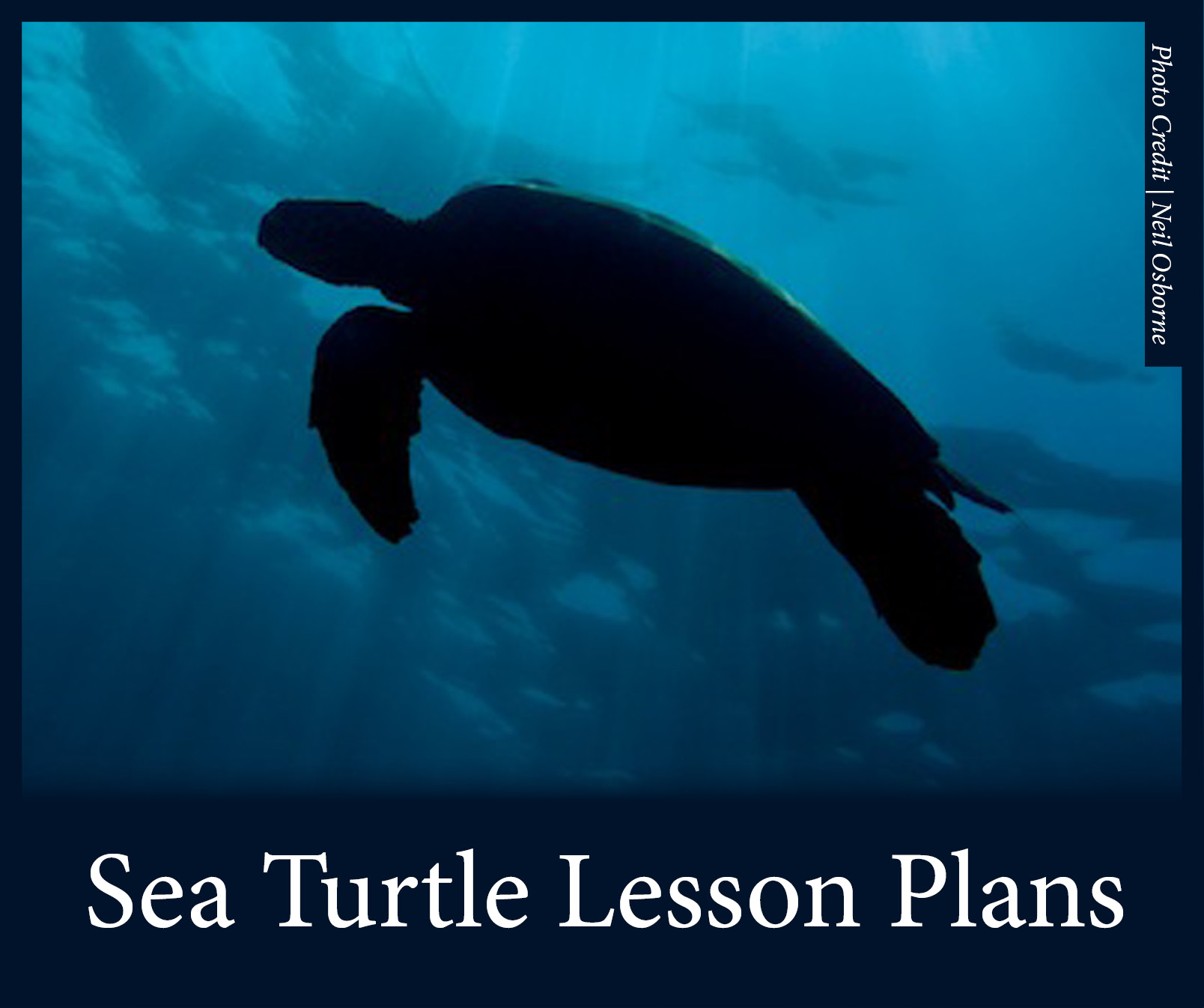 Sea Turtle Lesson Plans 2.jpg