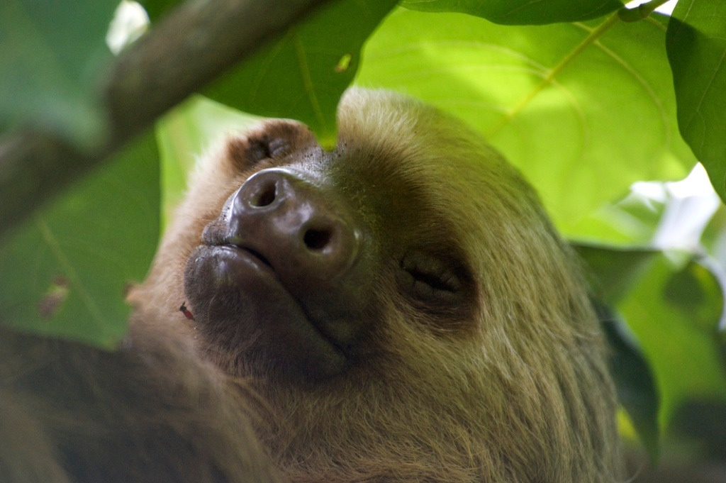 Day 5: Look for sloths at Cahuita National Park