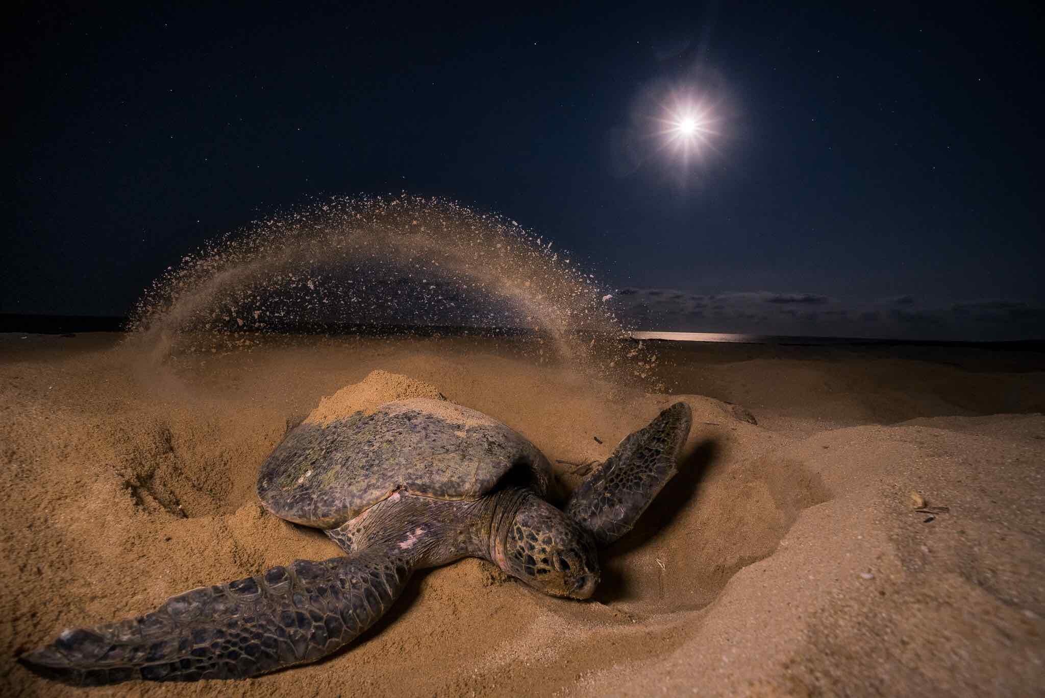 Sea Turtle Conservation Tours