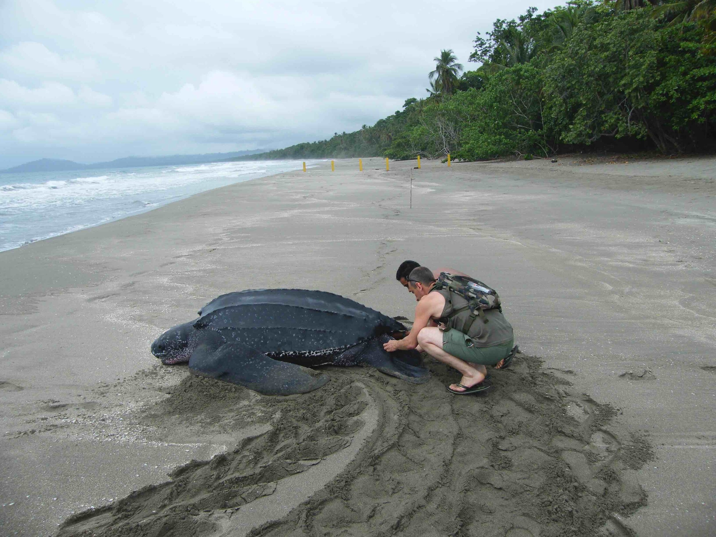 Costa Rica Leatherbacks