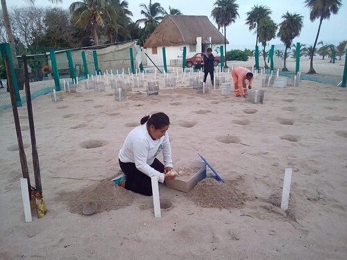 Photo: Grupo Ecologista Quelonios