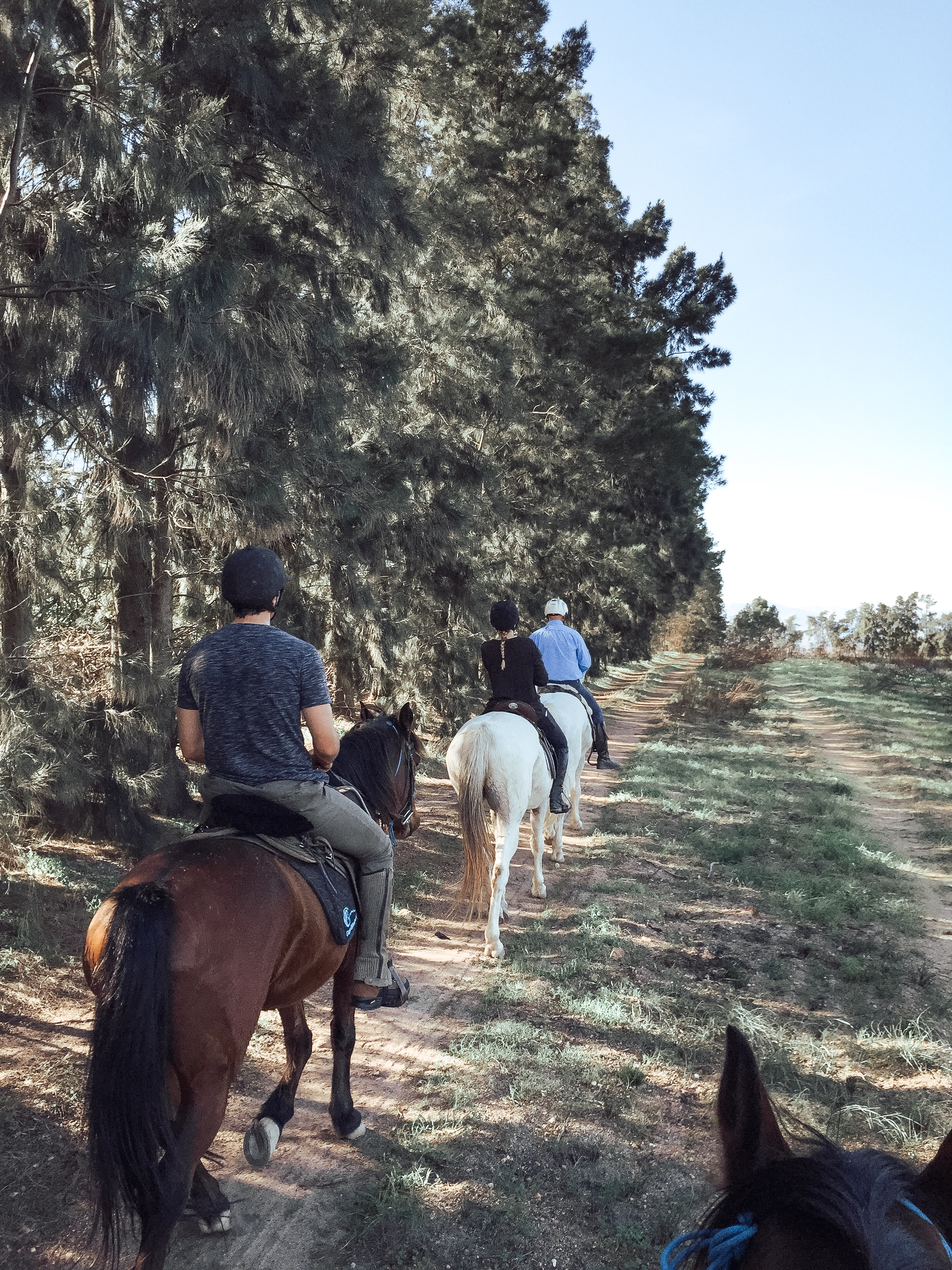 cape-winelands-riding.JPG