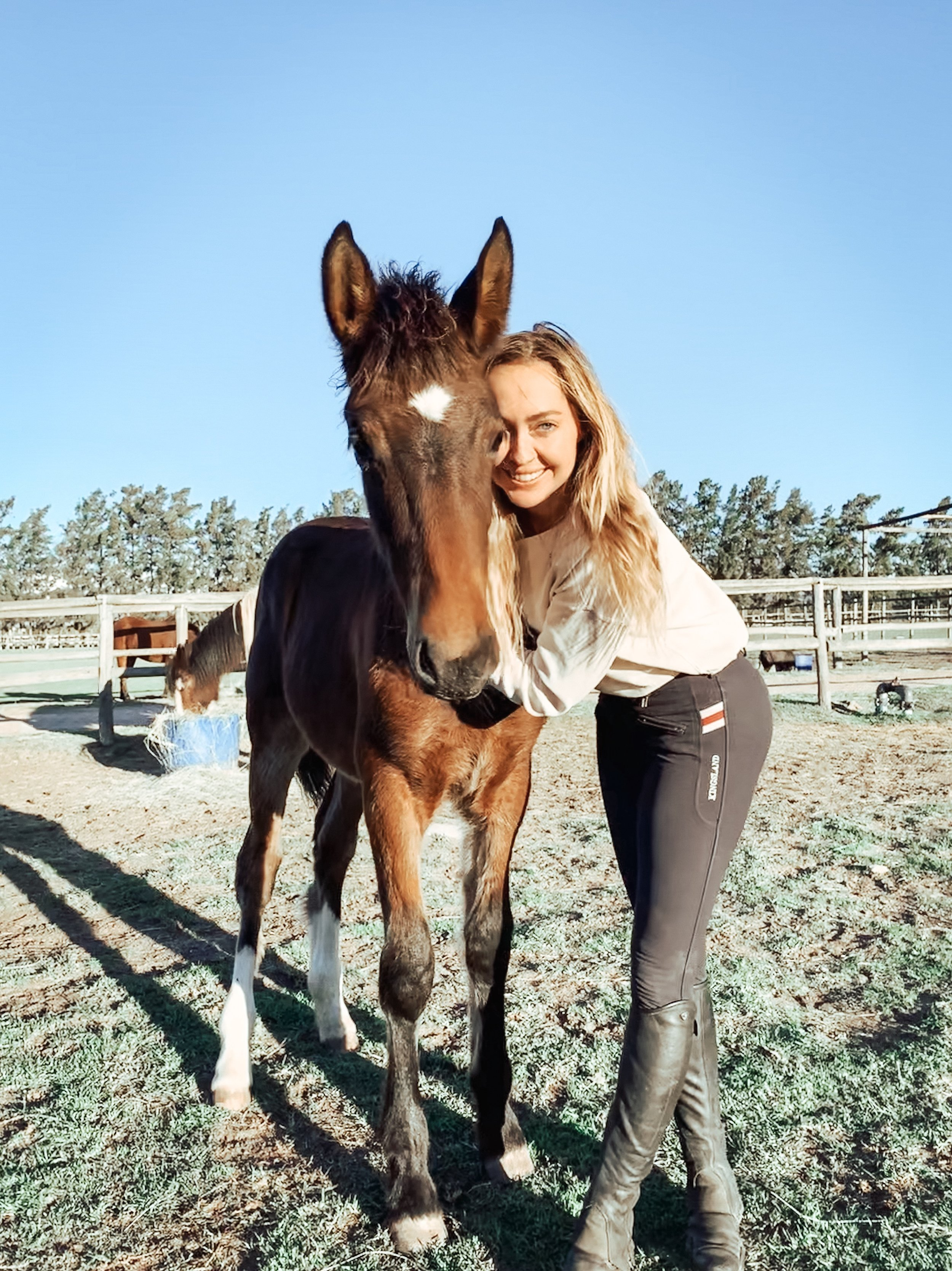 horses-south-africa.JPG