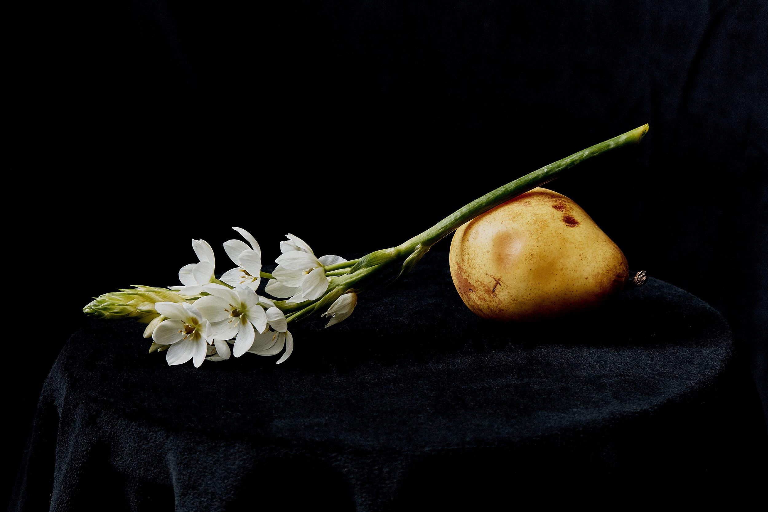 Bruised Pear and Flower by Daniel Villarreal.jpg