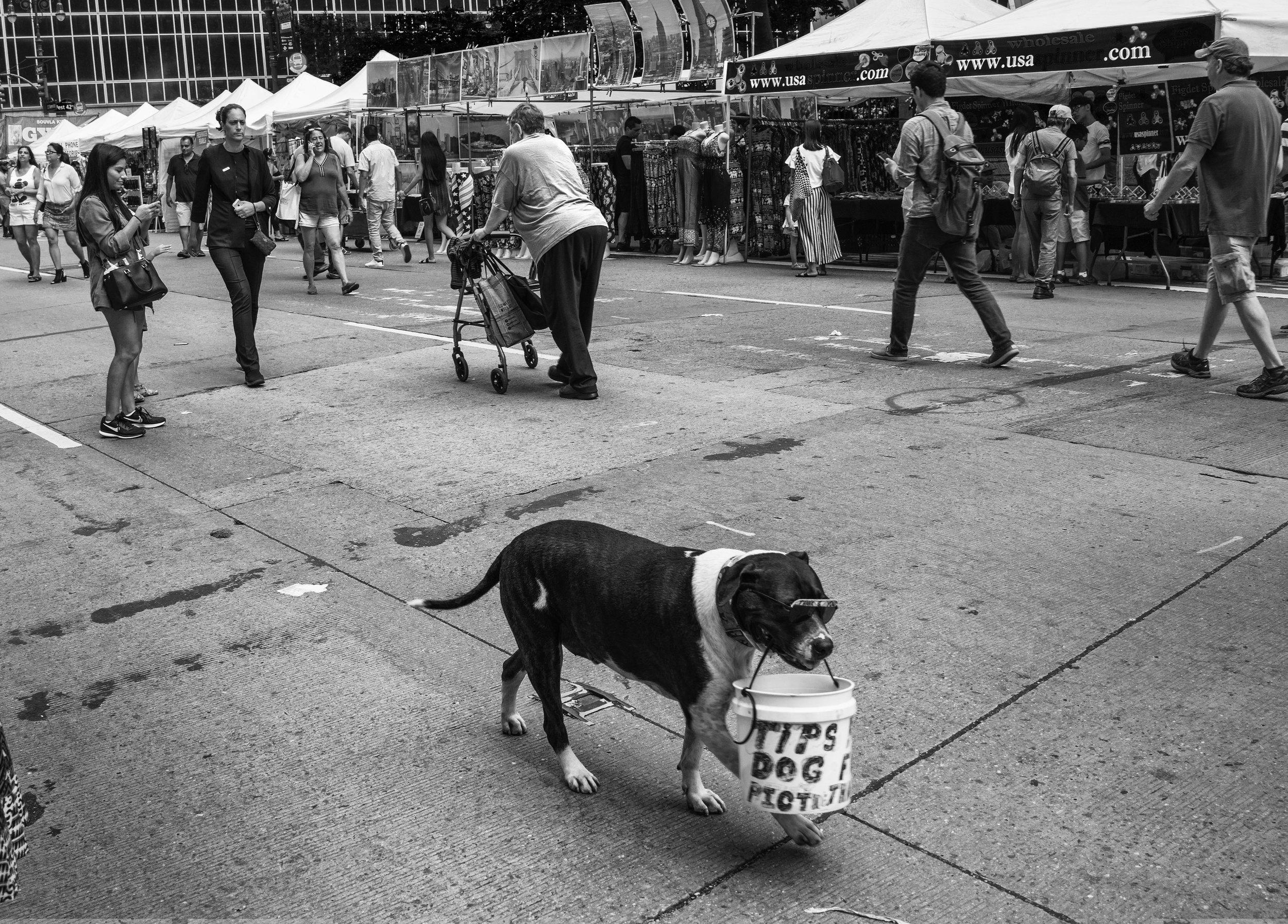 Copy of New York City 2017