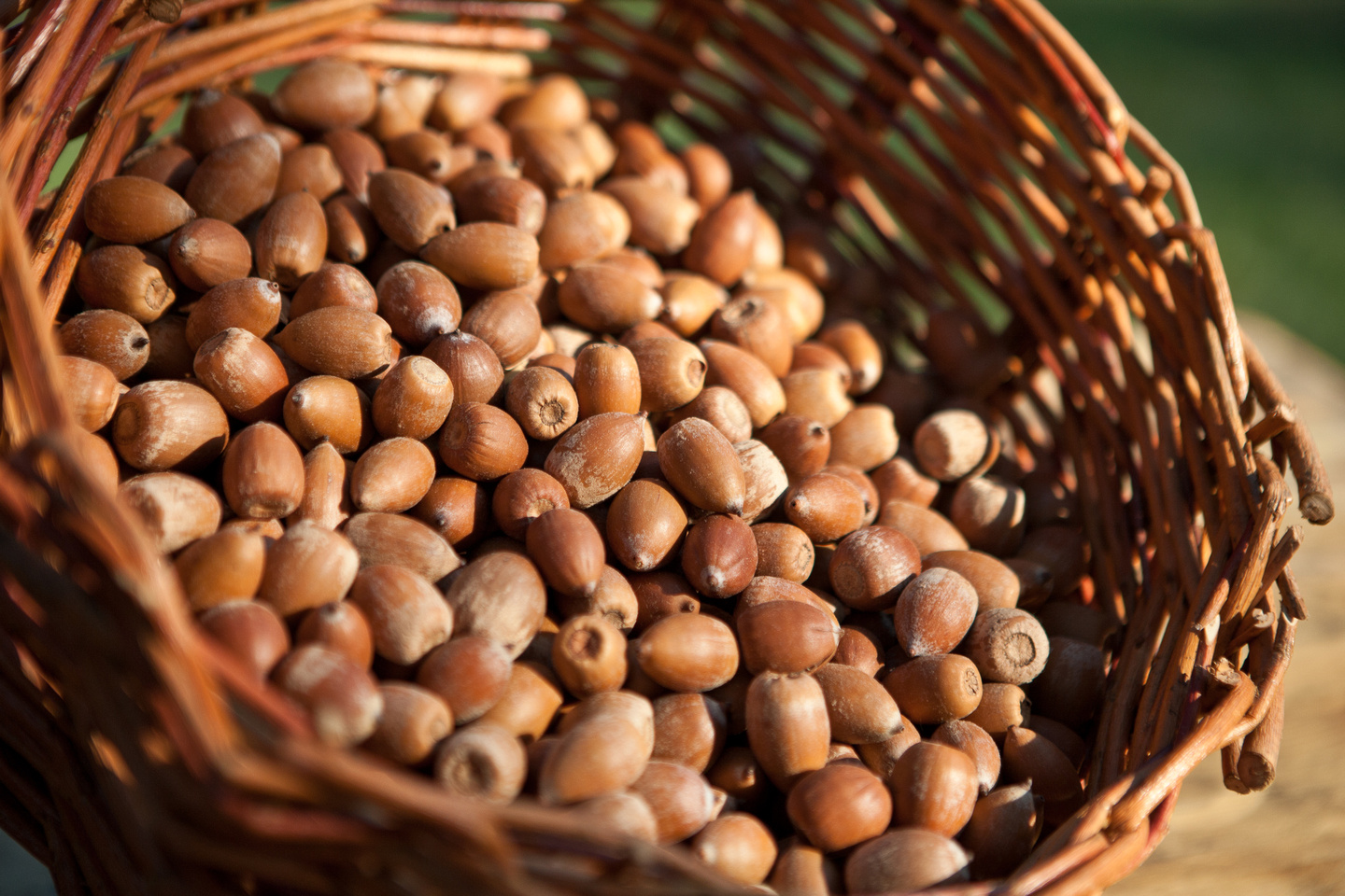acorns in basket.jpg