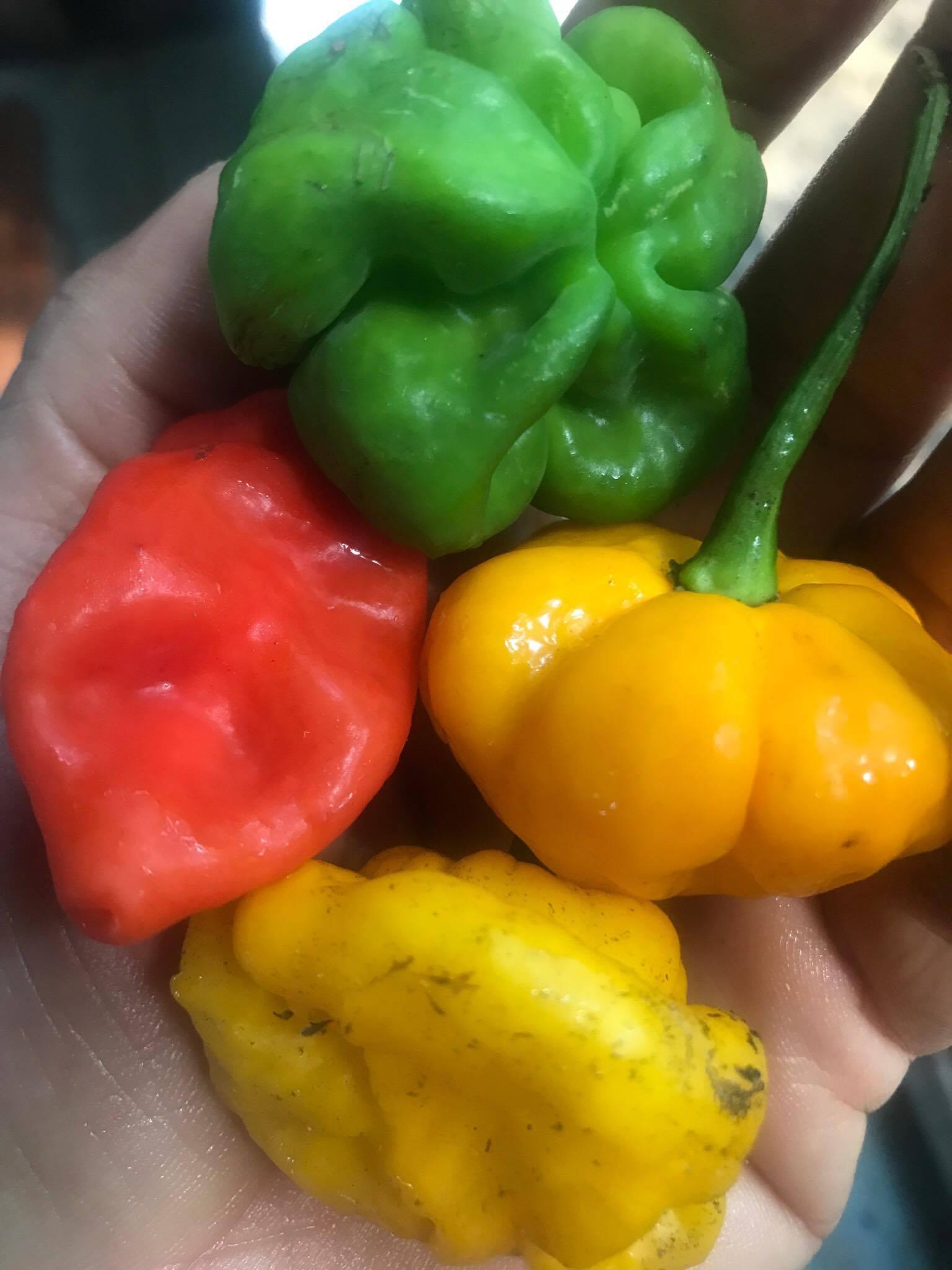 peppers anyone? farm fresh in Jamaica!