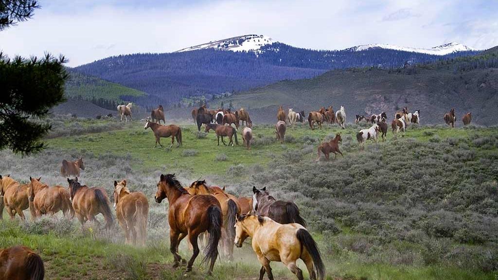 C Lazy U Ranch  in Granby, CO
