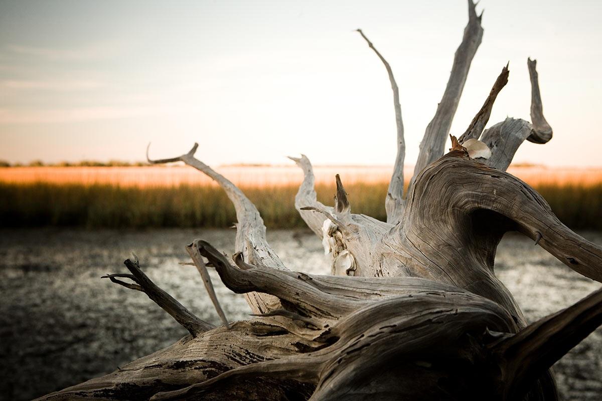 Wild Dunes_Nature_DriftwoodinMarsh.jpg