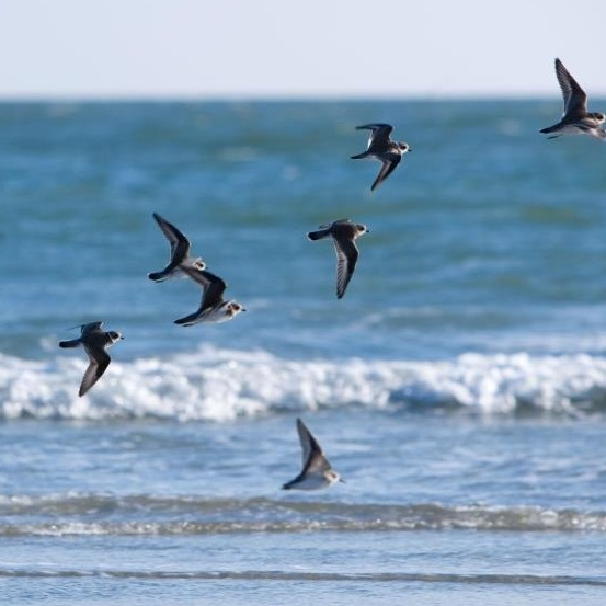 wild-dunes-ocean-birds.jpg