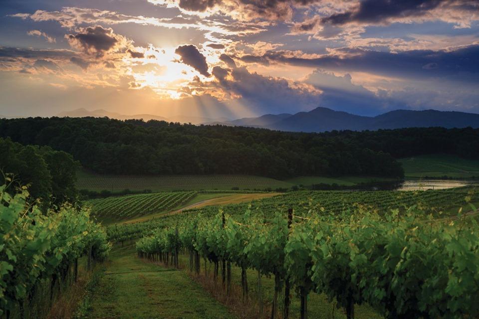 biltmore-vineyards.jpg