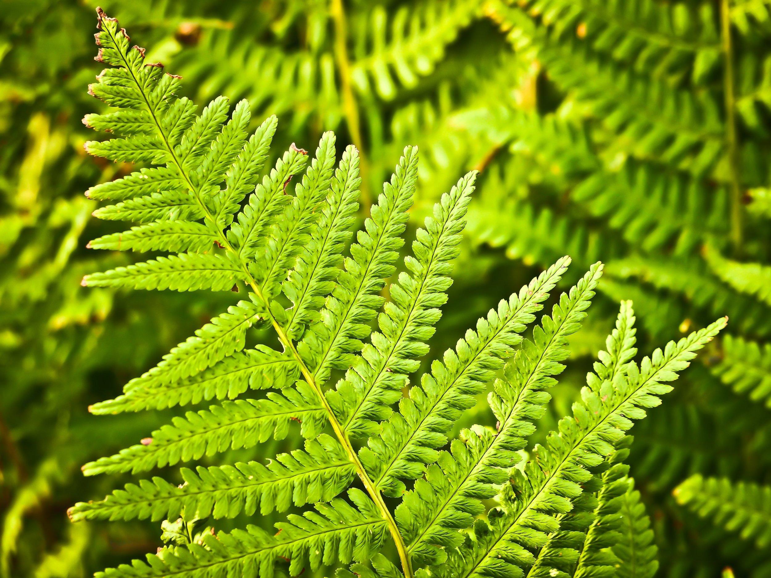 botany-ecosystem-flora-33328.jpg