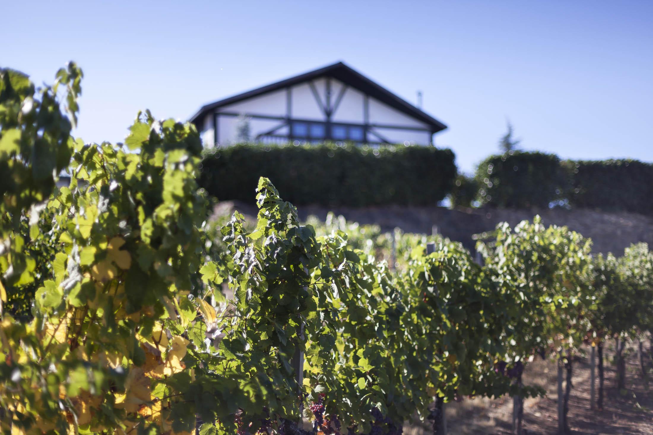 Weisinger Family Winery_0527_web.jpg