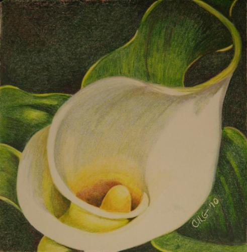 """Colored Pencil from """"Calla Triptych"""""""