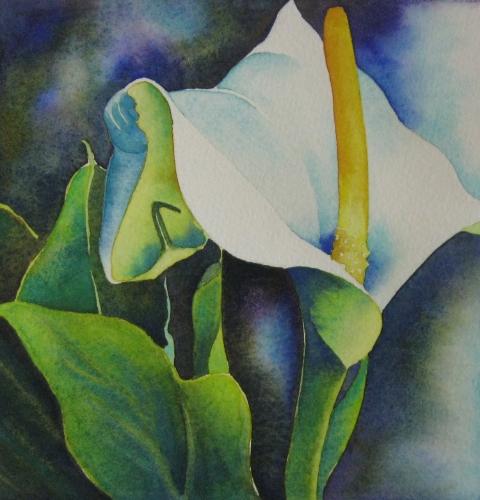 White Calla Lily Solo
