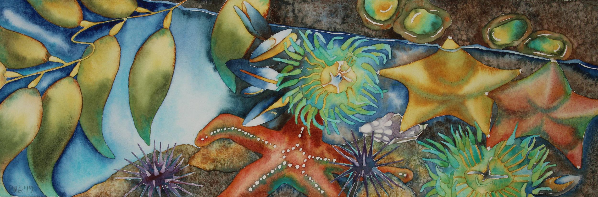 Sea Life Watercolors -