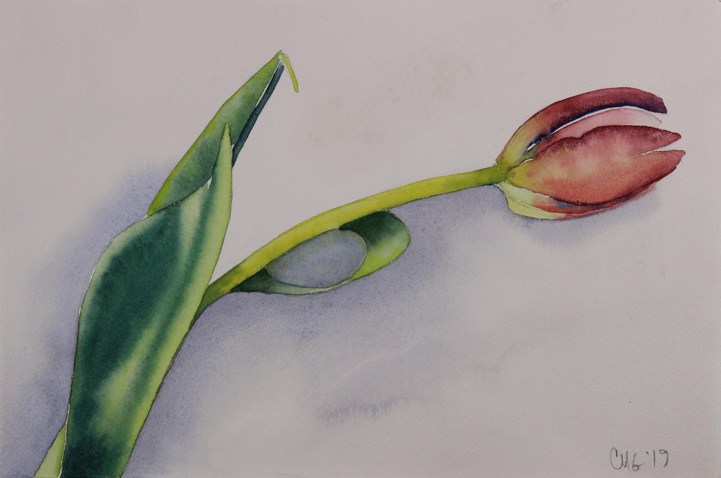Valentine Tulip.jpg