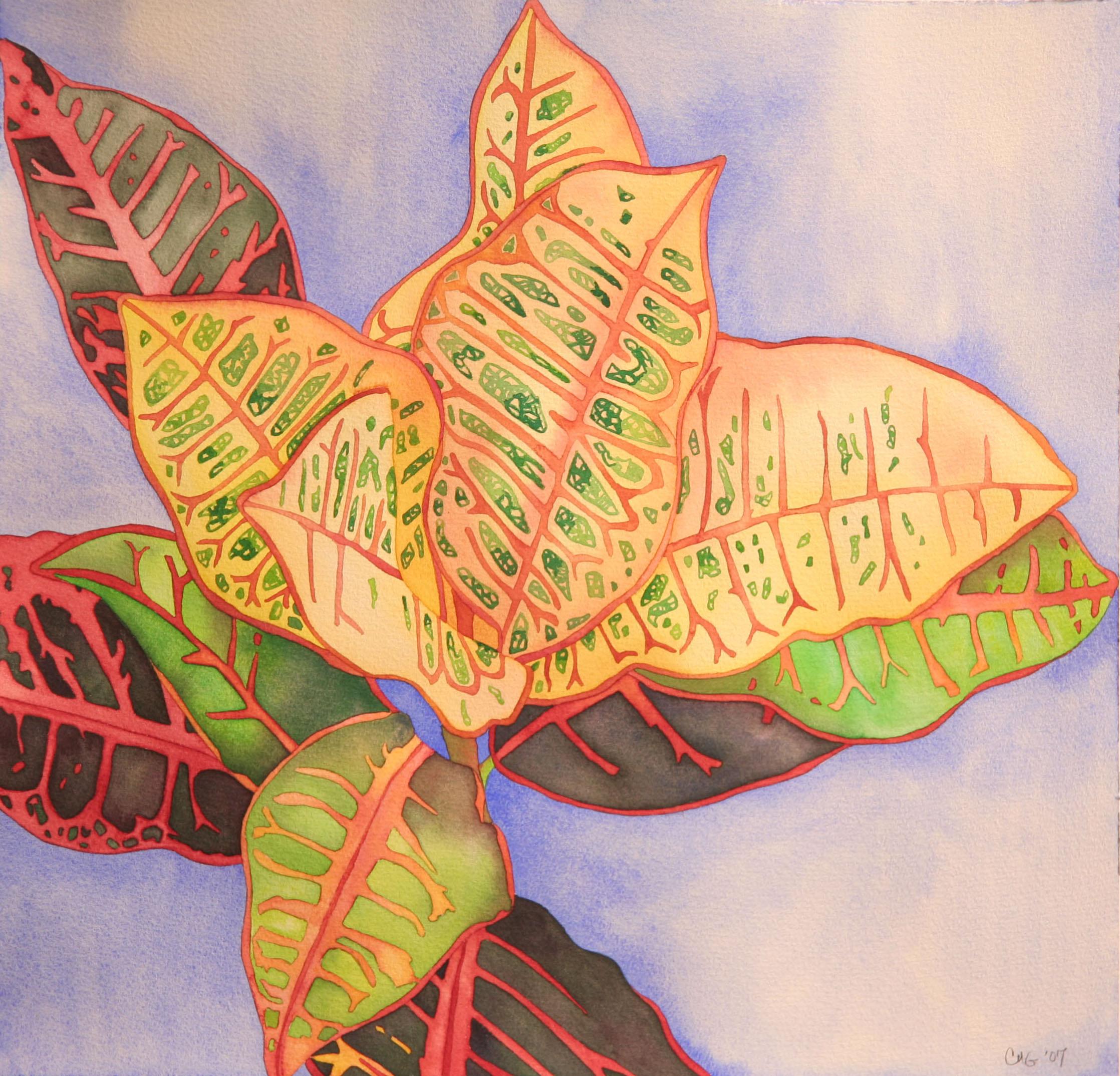 Caribbean Croton
