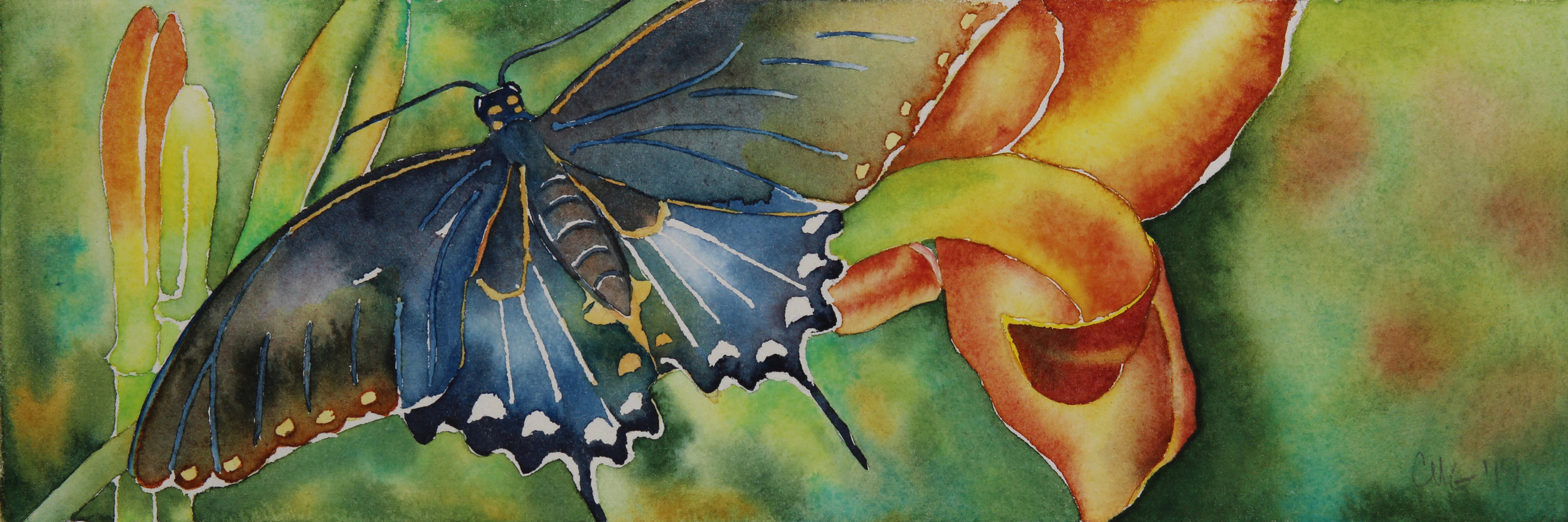 Themed Watercolor Shows -