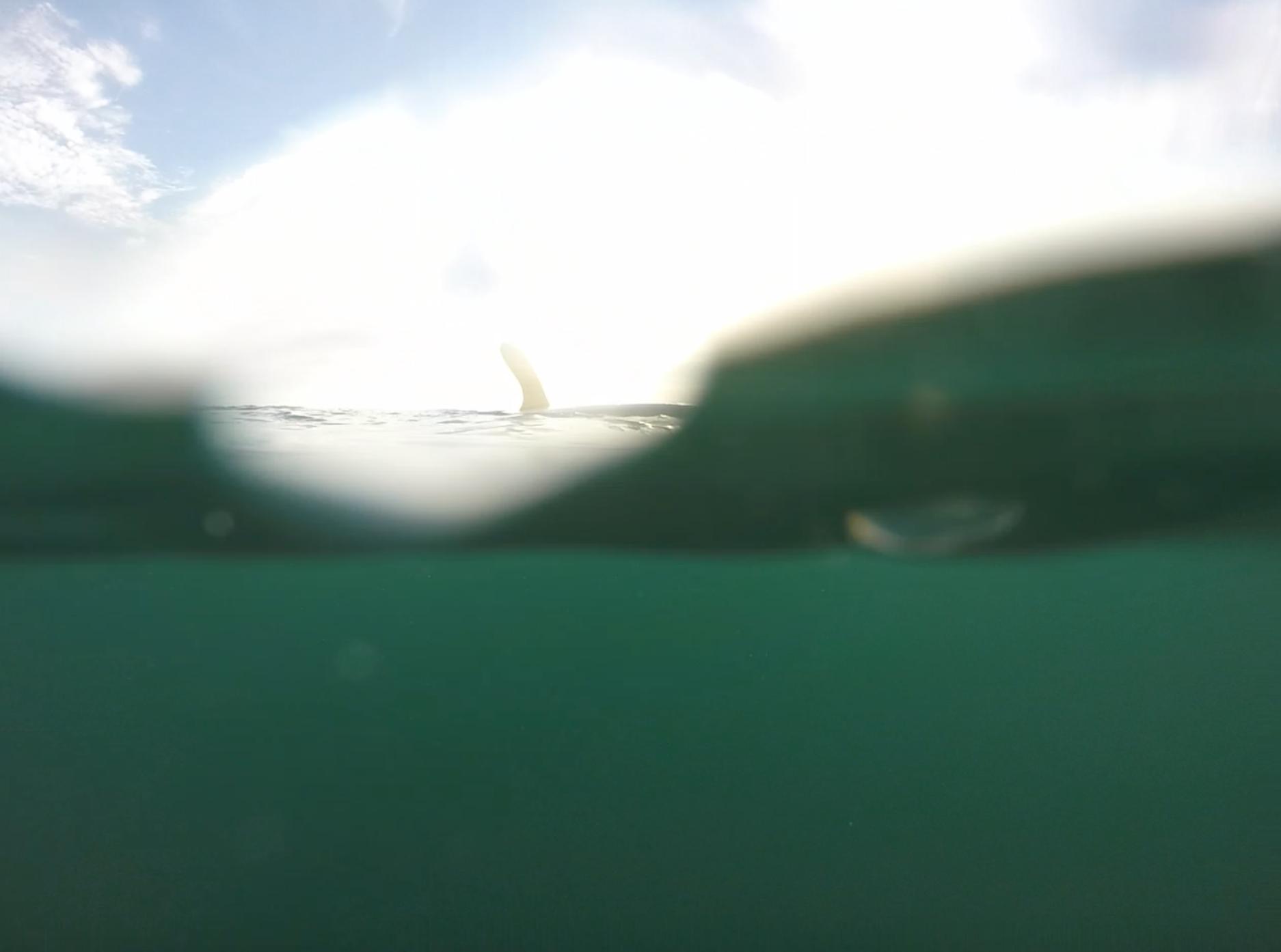 bruce_jones_surfboards_17.png