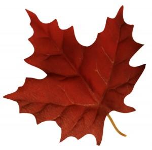 Canadian-AJET-Group-300x296.jpg