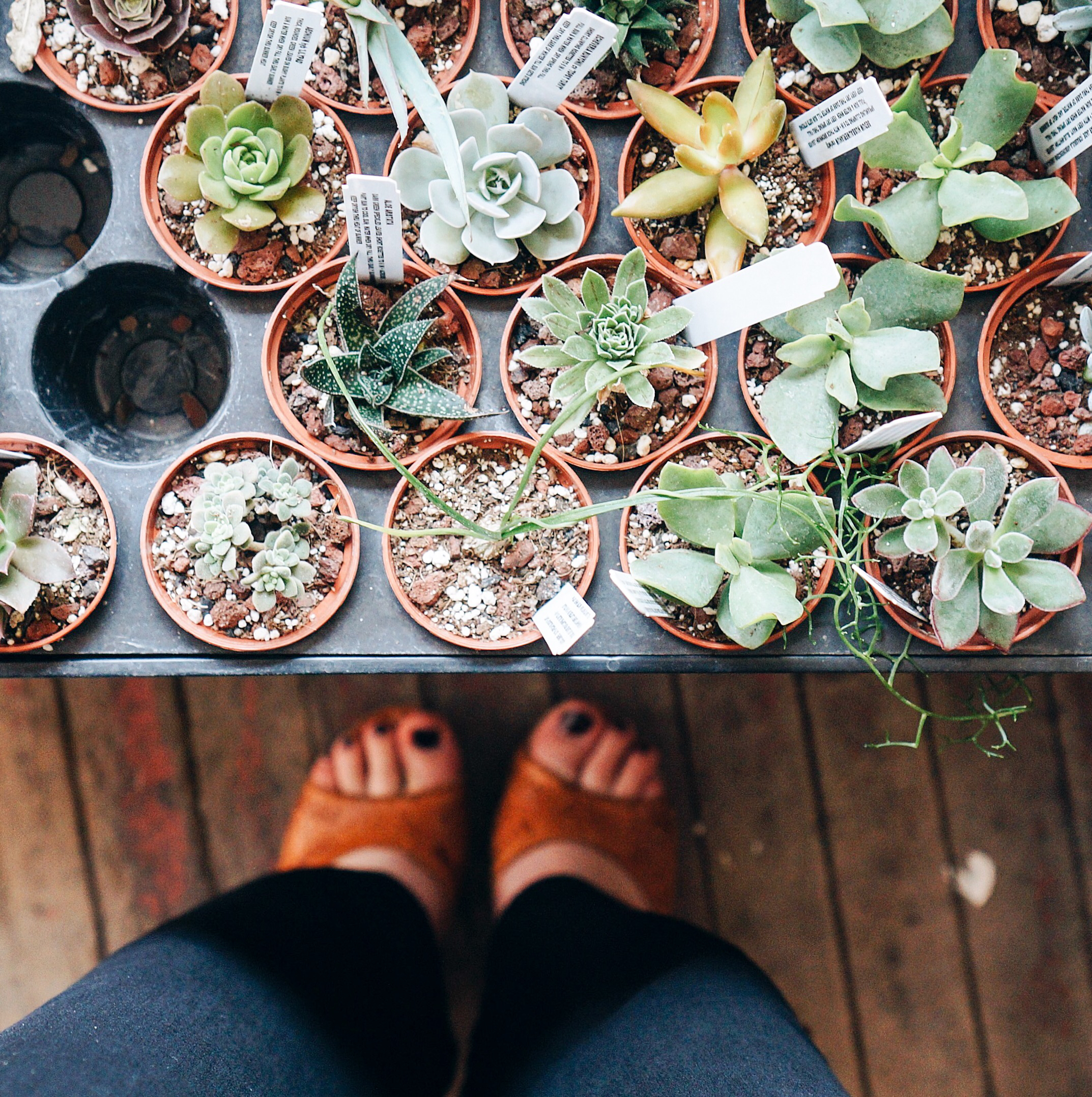 From Verdant Matter. Plant store/boutique.