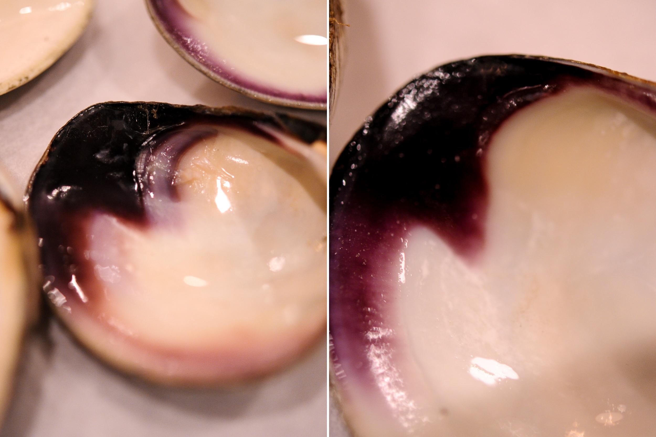clams-2.jpg