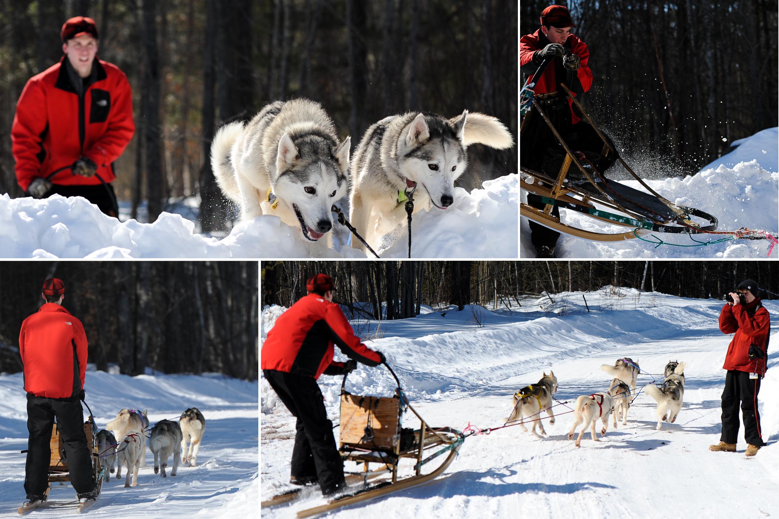 skijoring-1.jpg