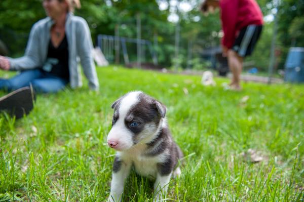 Wolfsong Pups