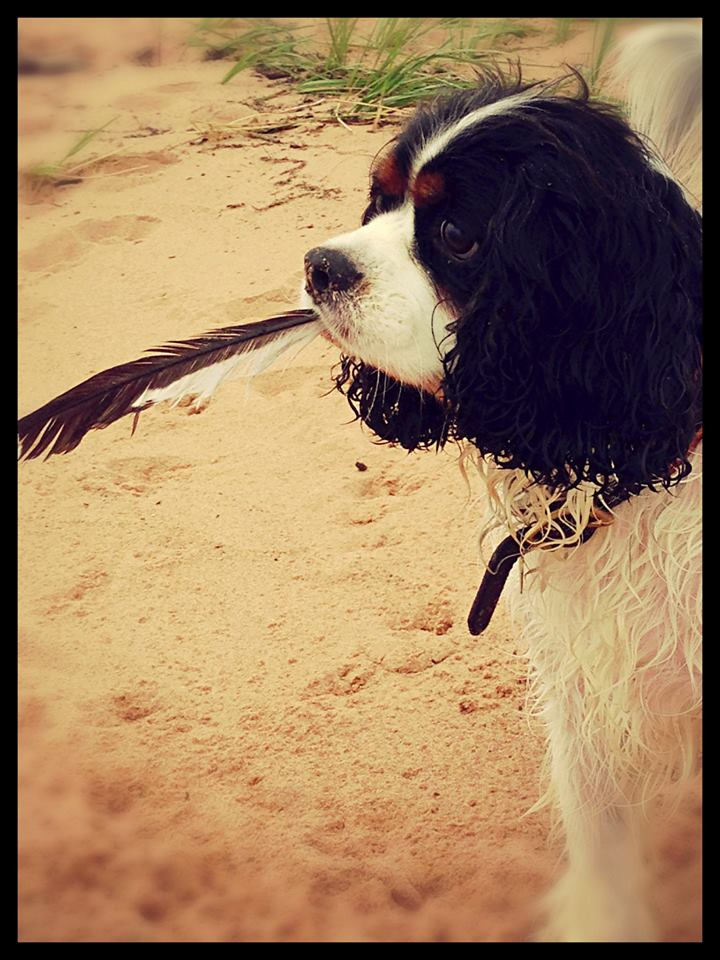 Seamus and feather