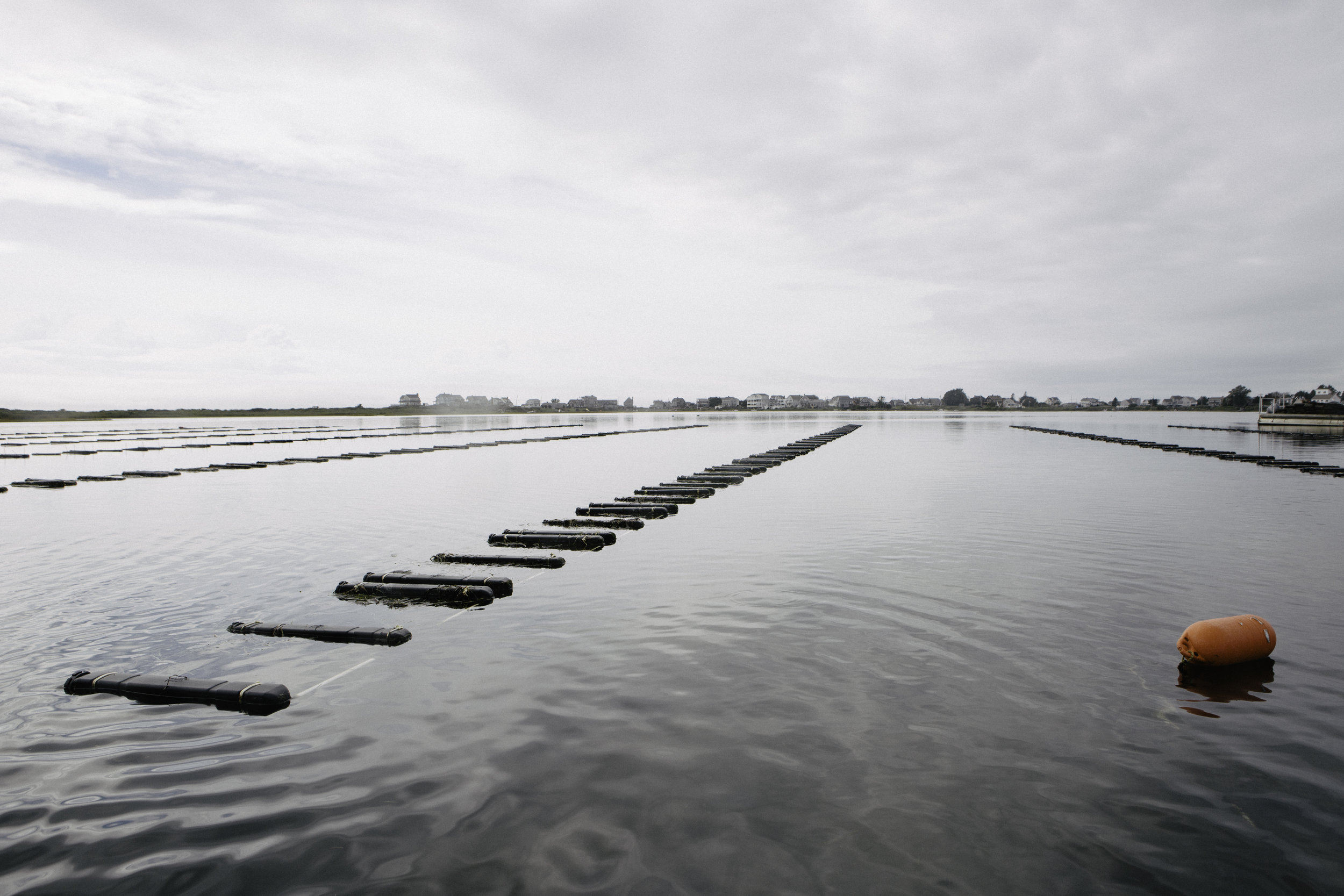 Rows of oyster cages sit on Potter Pond, South Kingstown, Rhode Island. The farm is divided into five sections over seven acres.