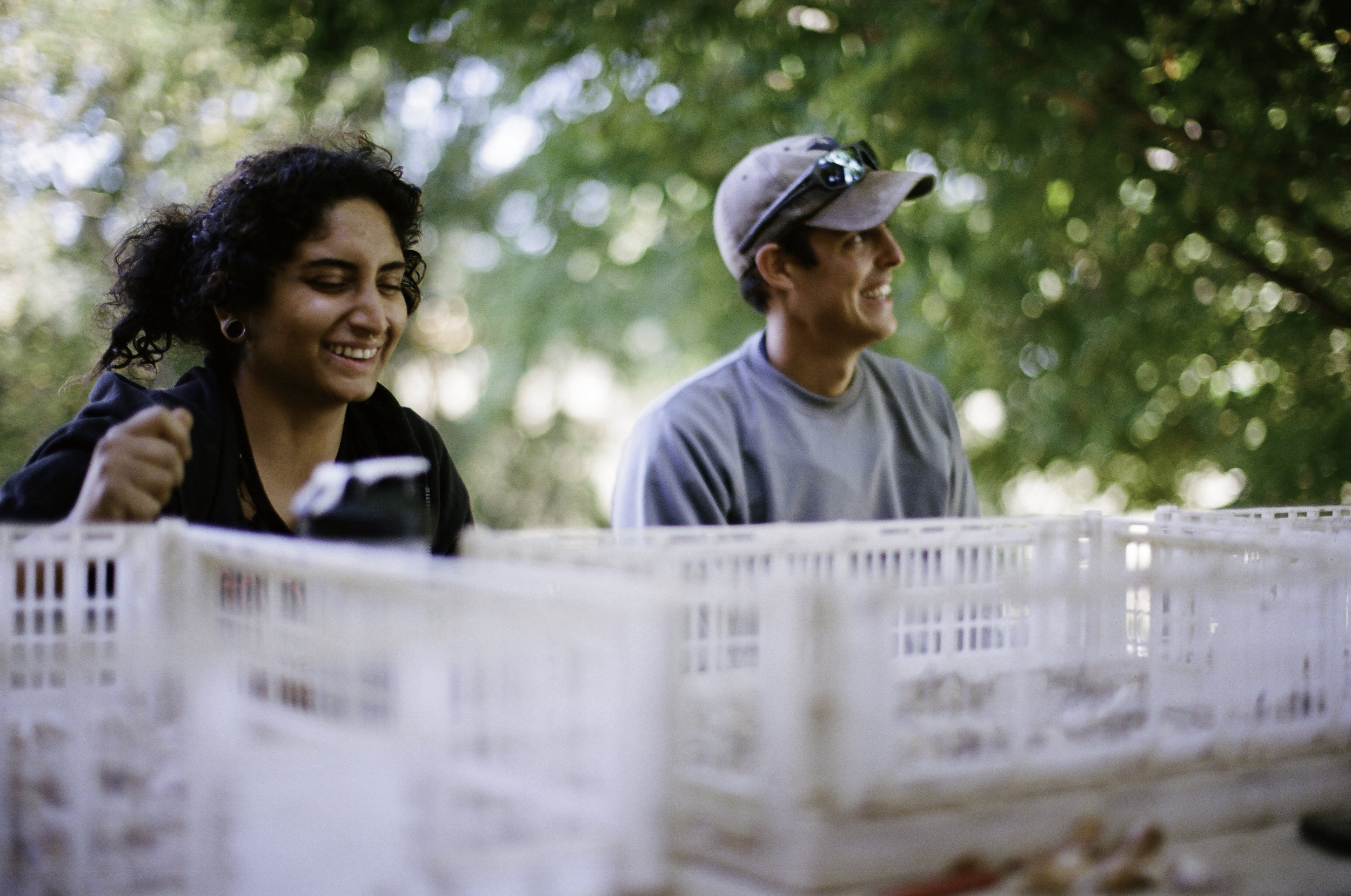 Zahra  Hooshyar  and  Gerardo Patron-Cano are pursuing careers in agriculture.  They broke open roughly 2500 cloves and competed to see who could find the biggest one.