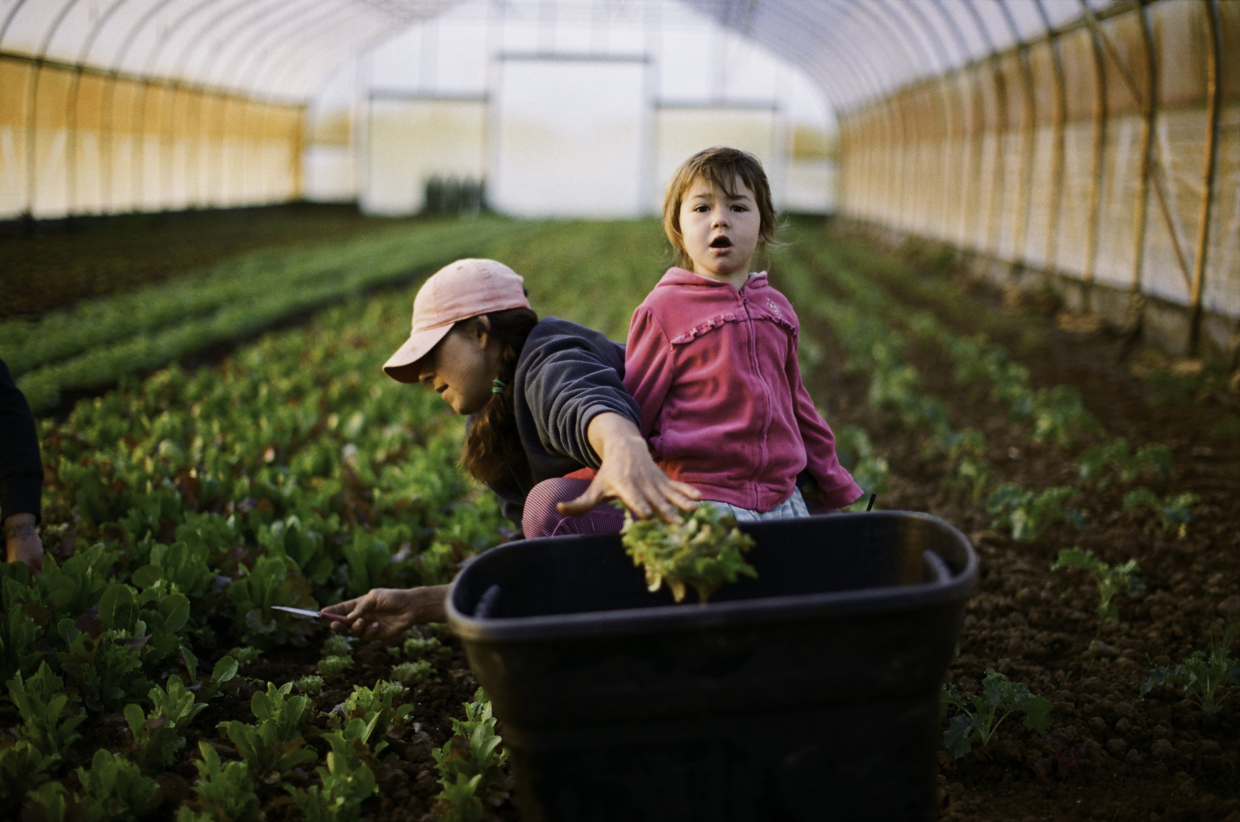 Sunshine and her youngest daughter, Natasha, in a high tunnel harvesting baby lettuce. Their day typically starts at 6:30 AM and goes until 7 to 8 PM.