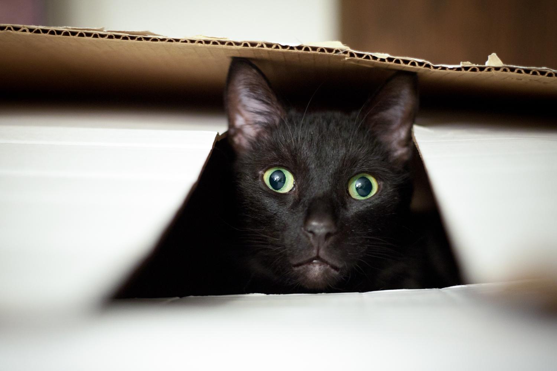 boyd in box