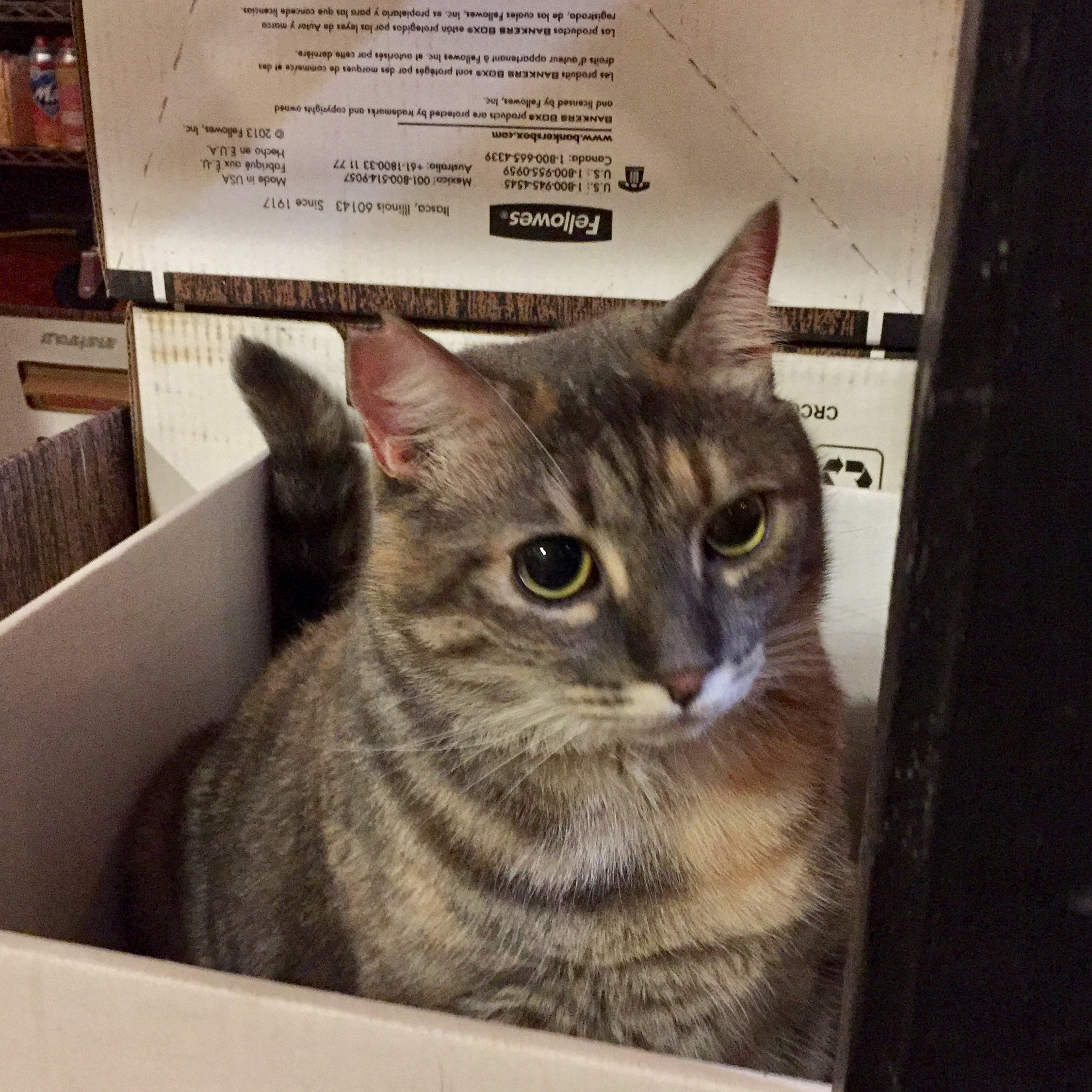 Nora sitting in a box.